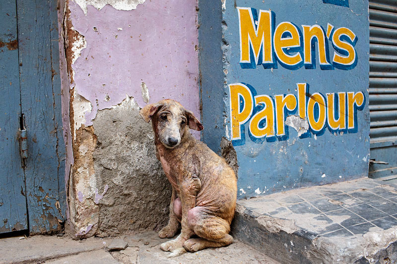 india_varanasi_old_city_animal_stray_dog