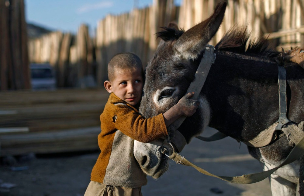 An Afghan boy stands next to his donkey cart outside a timber market in Kabul
