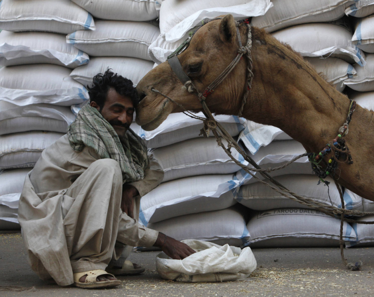 Qasim, a labourer, smiles as a camel nuzzles him near sacks of grain in a wholesale market in Karachi