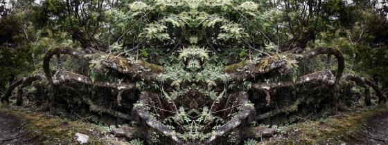 Entidades. Proyecto Fotográfico. 2013-2014